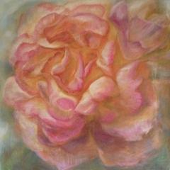 Rose 1 wärme