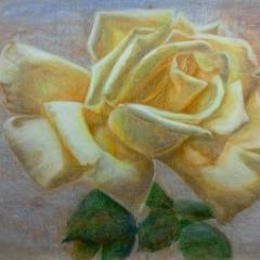 Rose 3 Raum