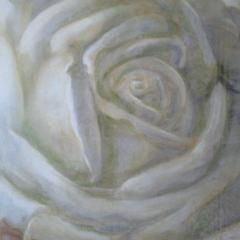 Rose geschlossen