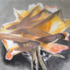Sterbende Rose